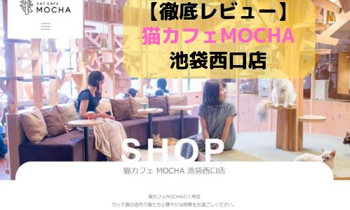 【徹底レビュー】猫カフェモカ 池袋西口店を体験レポート!
