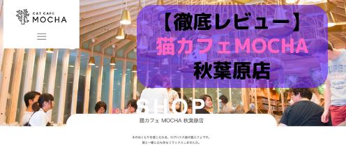 【徹底レビュー】猫カフェモカ 秋葉原店を体験レポート!