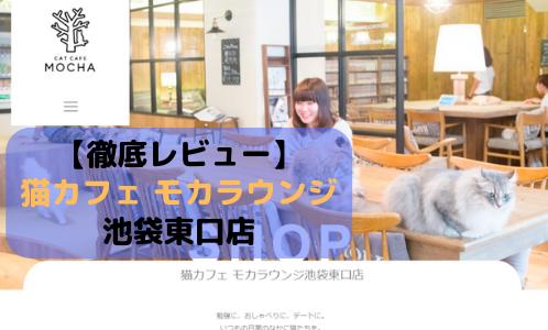 【徹底レビュー】猫カフェモカラウンジ 池袋東口店を体験レポート!