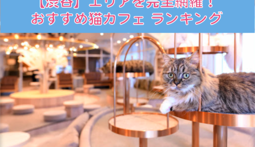 【厳選!】渋谷でおすすめの猫カフェランキング!