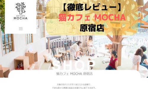 【徹底レビュー】猫カフェモカ 原宿店を体験レポート!
