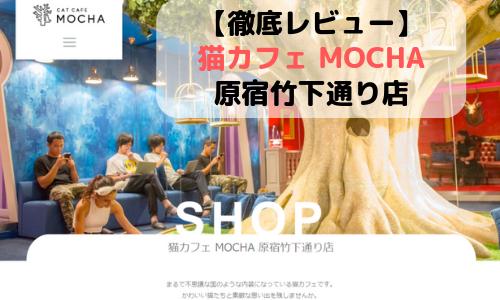 【徹底レビュー】猫カフェモカ 原宿竹下通り店を体験レポート!