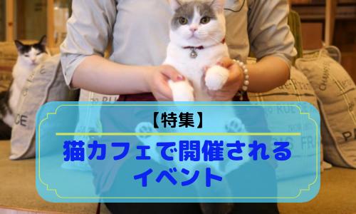 【特集】猫カフェで開催されるイベントを徹底解説!