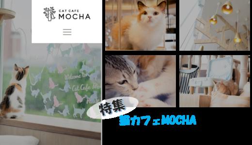 猫カフェモカ【2020年最新】全16店を調べまし た!口コミ・写真・評判を行く前に知る!可愛いMOCHAネコの写真あり