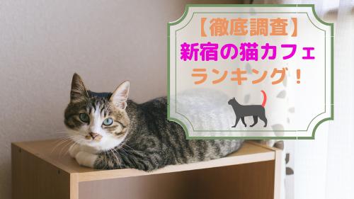 【厳選!】新宿でおすすめの猫カフェランキング!