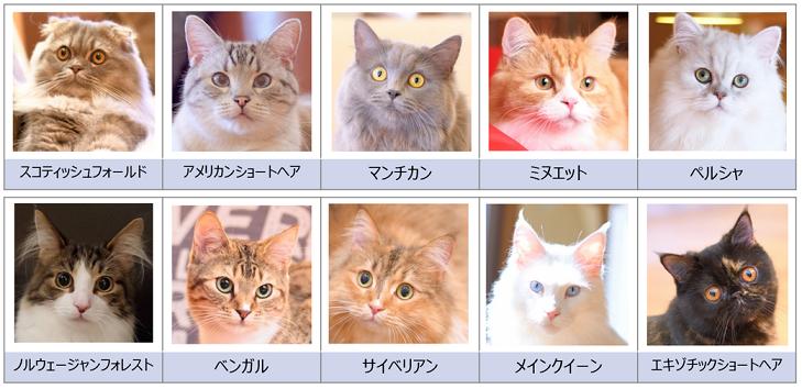 猫カフェモカの猫の種類