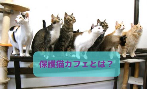 【特集】保護ねこカフェについて解説!