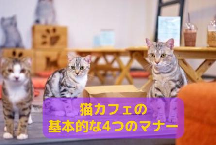 【必読】基本的な4つのマナーを知って猫カフェを楽しもう!