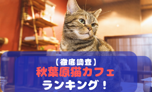 【厳選!】秋葉原でおすすめの猫カフェランキング!