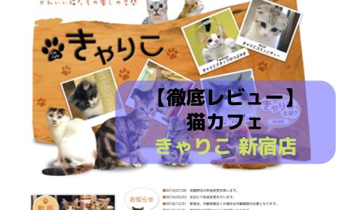 【徹底レビュー】猫カフェ きゃりこ 新宿店を体験レポート!